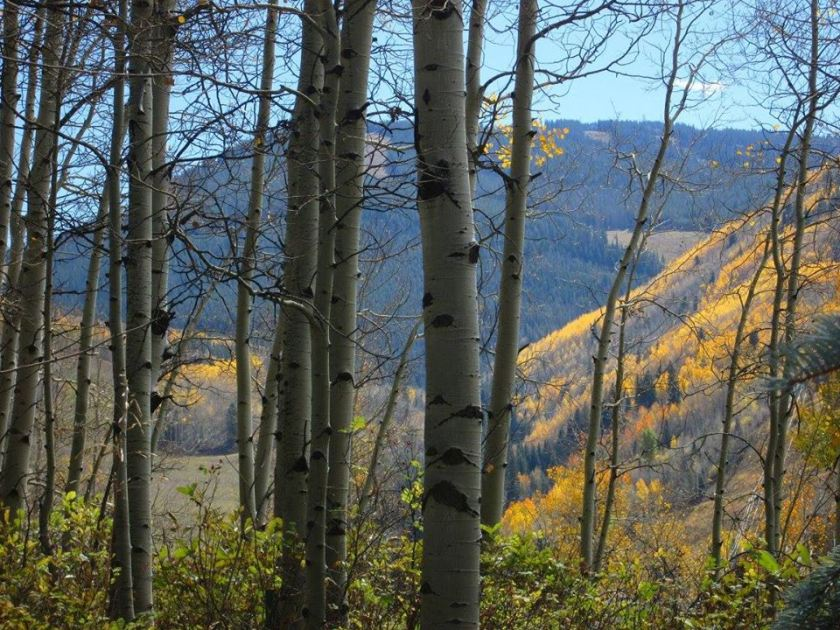 fall-in-rockies