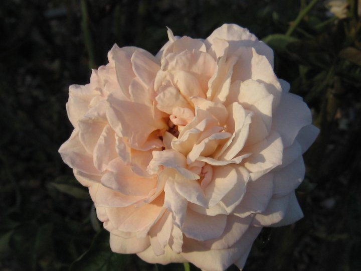 rose-everything-is-exactly-as-it-is-supposed-to-be